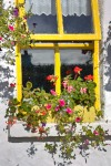 Yellow Window by Phillip A. Wright, AAUW Healdsburg (CA) Branch